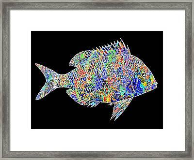 Fish Study 2 Framed Print