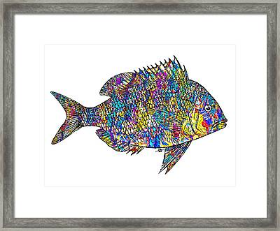 Fish Study 4 Framed Print