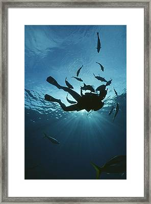 Fish Swim Around A Diver In The Cayman Framed Print by Raul Touzon