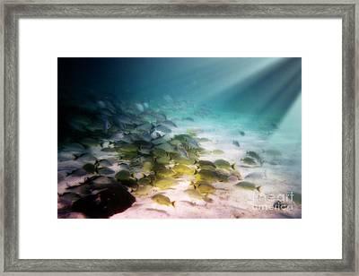 Fish Swim In The Light Framed Print by Sven Brogren