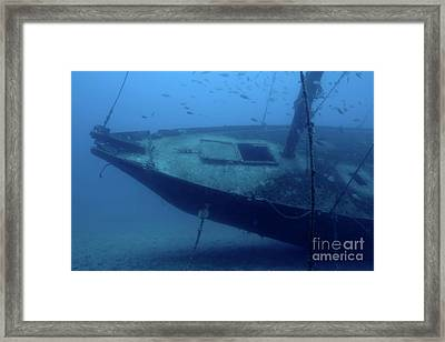 Fish Swimming Around The Hull Of The Le Voilier Shipwreck Underwater Framed Print