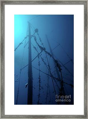 Fish Swimming Around The Mast Of The Le Voilier Shipwreck Underwater Framed Print by Sami Sarkis
