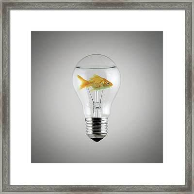 Fish Framed Print by Zoltan Toth