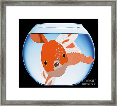 Fishbowl Framed Print by Priscilla Wolfe
