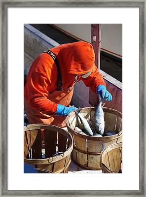 Fisherman Sorting His Catch Framed Print