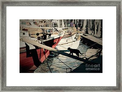 Fisherman's Cat  Framed Print