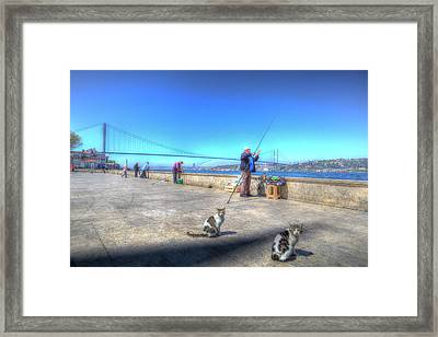 Fishermen And Cats Istanbul Framed Print