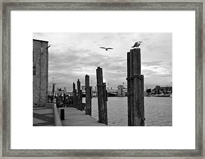Framed Print featuring the photograph Fishery by Kathleen Stephens