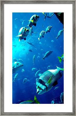 Fishes Framed Print by Leena Kewlani