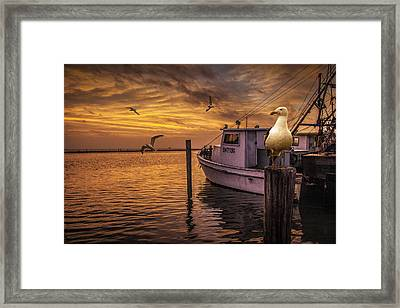 Fishing Boat And Gulls At Sunrise Framed Print by Randall Nyhof