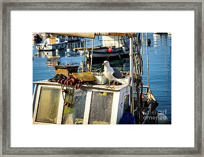 Fishing Boat Captain Seagull - Rovinj, Croatia Framed Print