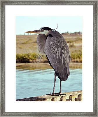 Fishing Buddy Framed Print