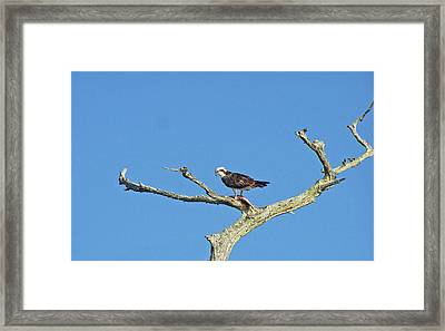 Fishing From The Sky Framed Print by Cheryl Allin