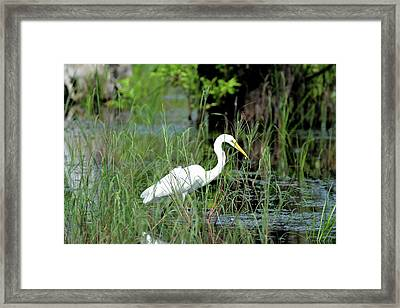 Fishing In St. Andrew State Park Framed Print by Tamra Lockard