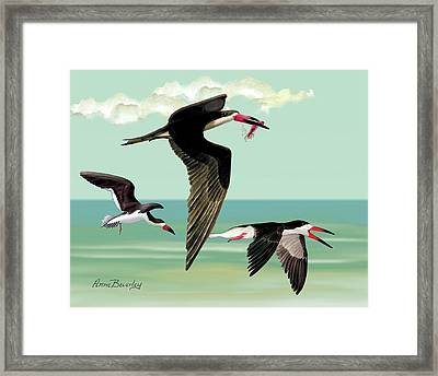 Fishing In The Gulf Framed Print