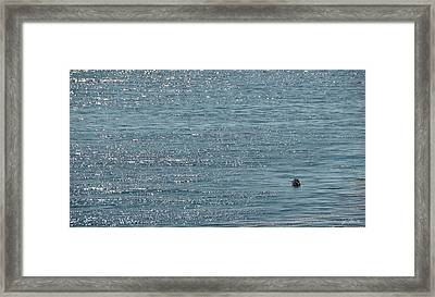 Framed Print featuring the photograph Fishing In The Ocean Off Palos Verdes by Joe Bonita