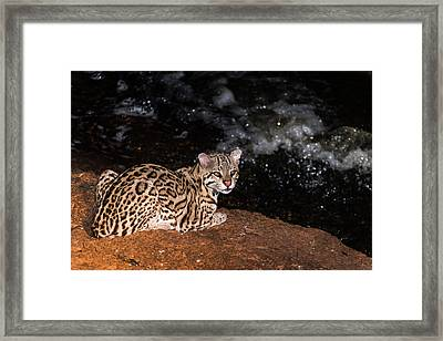 Fishing In The Stream Framed Print by Alex Lapidus