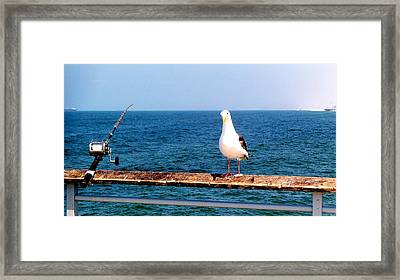 Fishing Framed Print by J Perez