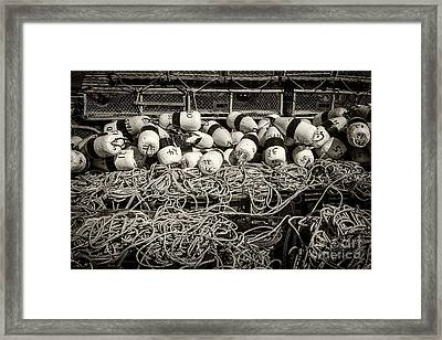 Fishing Lobster Framed Print by Elena Elisseeva