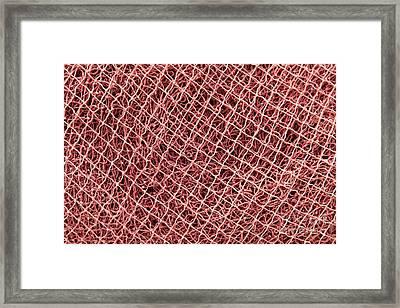 Fishing Nets Framed Print by Gaspar Avila
