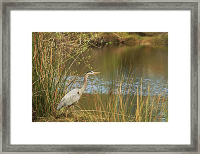 Framed Print featuring the photograph Fishing Oceano Lagoon by Art Block Collections
