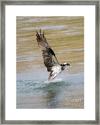 Fishing The Yakima Framed Print by Mike Dawson