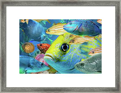 Fishy Collage 02 Framed Print