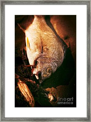 Fishy Find Framed Print