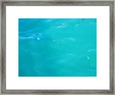 Fishy Sea Framed Print by Debbie Oppermann
