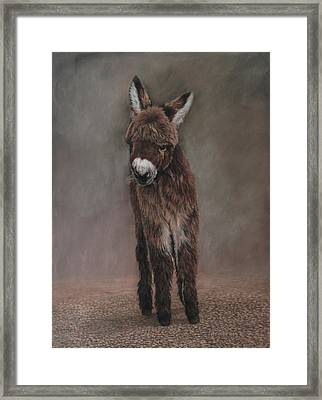 Fit For A King Framed Print by Carla Armbrust