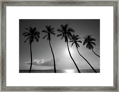 Five Coconut Palms Framed Print by Pierre Leclerc Photography
