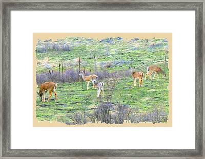 Five Deer Grazing Framed Print by Will Borden