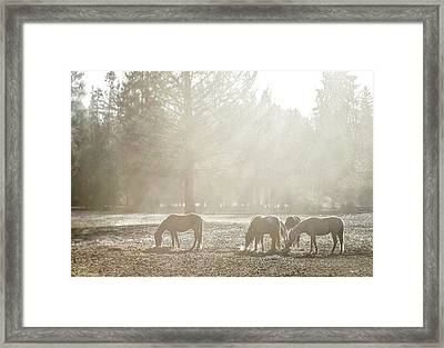 Five Horses In The Mist Framed Print