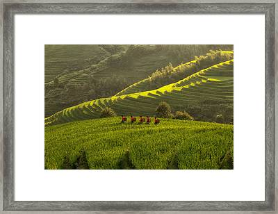 Five Ladies In Rice Fields Framed Print by Max Witjes