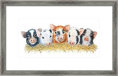 Five Little Pigs Framed Print by Sandra Moore