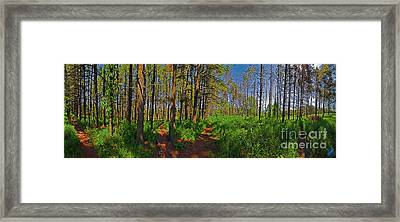 Five Paths Framed Print
