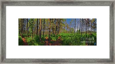 Paths, Pines 360 Framed Print