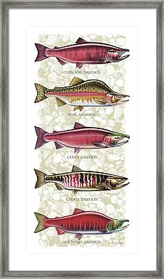 Five Salmon Species  Framed Print by JQ Licensing