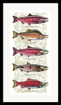 Salmon Framed Prints
