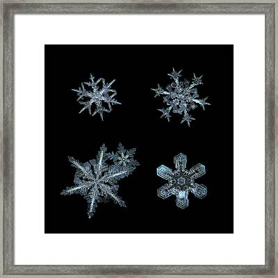 Five Snowflakes On Black 3 Framed Print