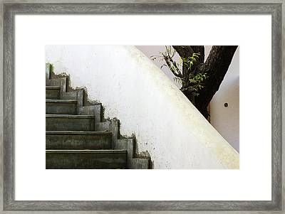 Framed Print featuring the photograph Five Steps To Glory by Prakash Ghai