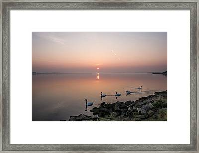 Five Swans At Dawn Framed Print