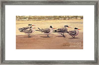Five Terns Framed Print by Julianne Felton