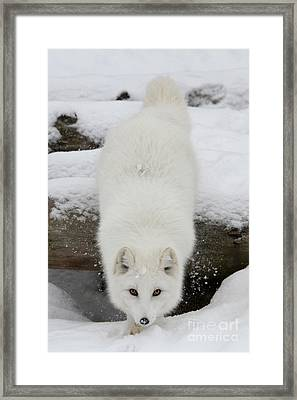 Fixated Framed Print