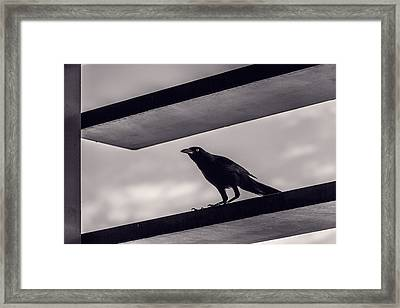 Fixation Framed Print