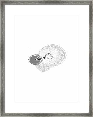 Fizzy Framed Print by Karen Y Diggs