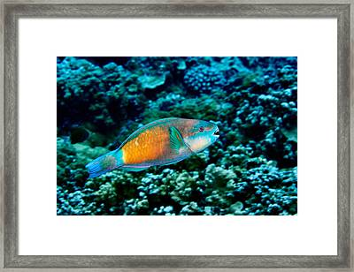 Fla-150811-nd800e-26049-color Framed Print