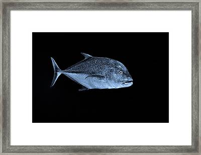 Fla-150811-nd800e-26052-bw-blue Framed Print
