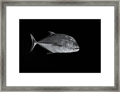 Fla-150811-nd800e-26052-bw-selenium Framed Print by Fernando Lopez Arbarello