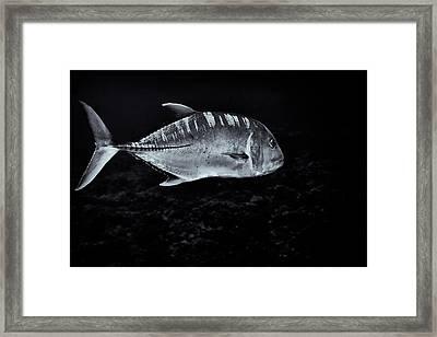 Fla-150811-nd800e-26063-bw-selenium Framed Print by Fernando Lopez Arbarello